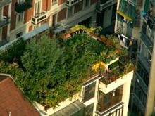 il giardino di Bruno visto dall'alto