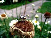 un insetto su un fiore