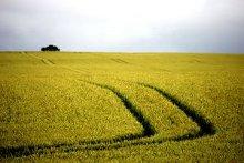 un campo arato