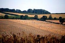 una distesa di campi coltivati