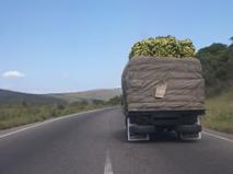 camion che trasporta verdura