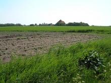 un campo coltivato