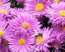 un campo di fiori