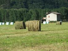 una fattoria