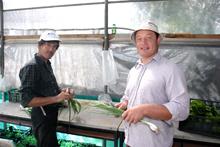 due ospiti di una fattoria sociale raccolgono cipolle