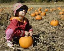 un bambino seduto in un campo di zucche