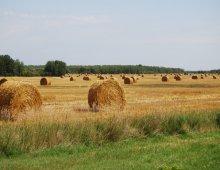 panorama di un campo