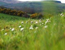 campo fiorito