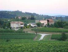 vitigno friulano