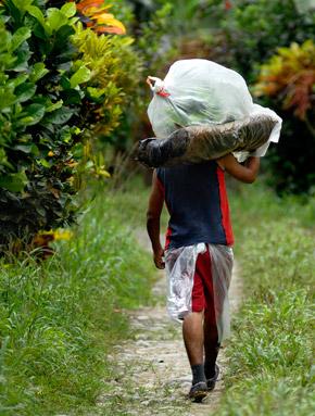 un lavoratore trasporta prodotti Fairtrade