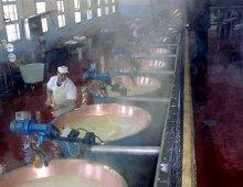la lavorazione del parmigiano-reggiano