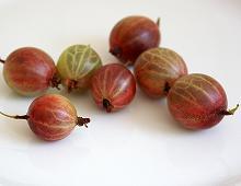 bacche di Uva Spina