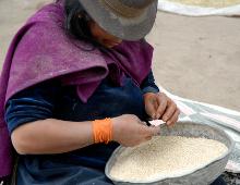 una donna dell'ecuador prepara i chicci di quinoa