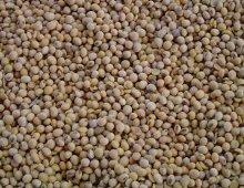 i fagioli di soia