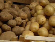 patate novelle e normali a confronto