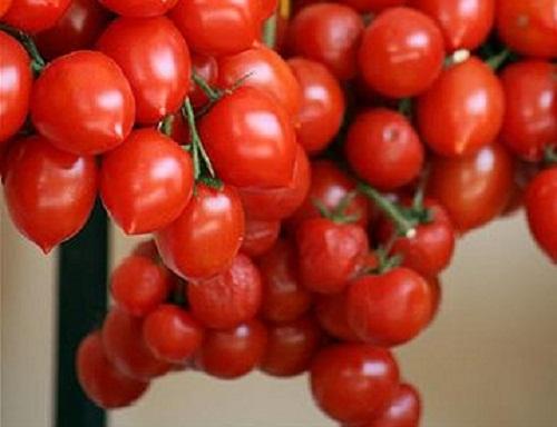 pomodorini del vesuvio