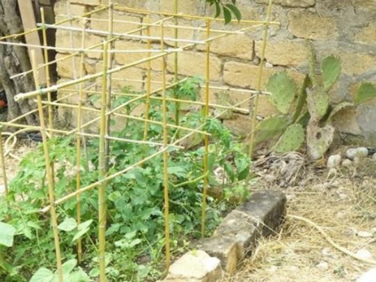 gabbia per i pomodori