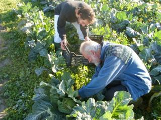 agricoltura biodinamica con Ortalon