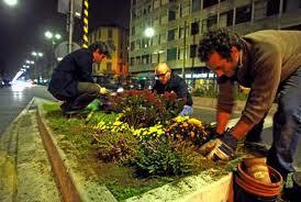 un'azione notturna di guerrilla gardening