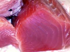tranci di pesce