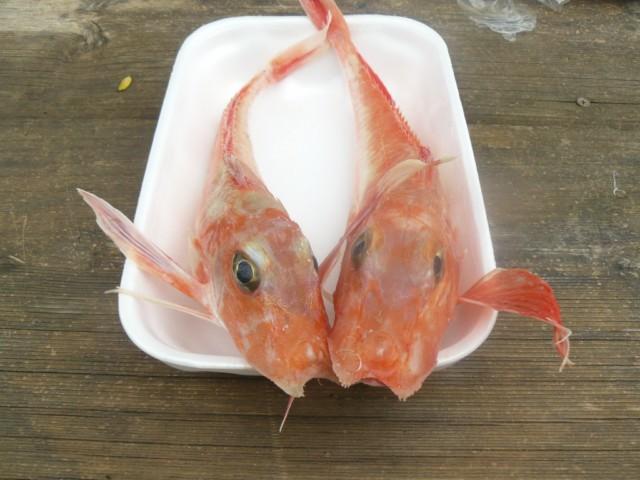 gallinelle di mare