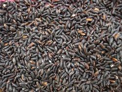 chicchi riso integrale venere