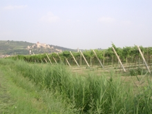 vigne venete