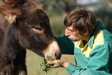 un ragazzo disabile offre da mangiare a un cavallo