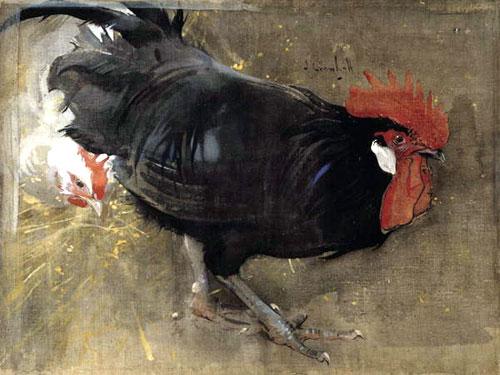 gallo disegnato