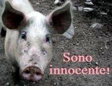 il maiale e' innocente!