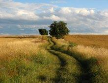 un campo di grano battuto dal vento