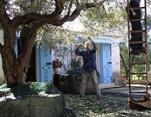 martino raccoglie le olive