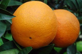 arance di Ribera