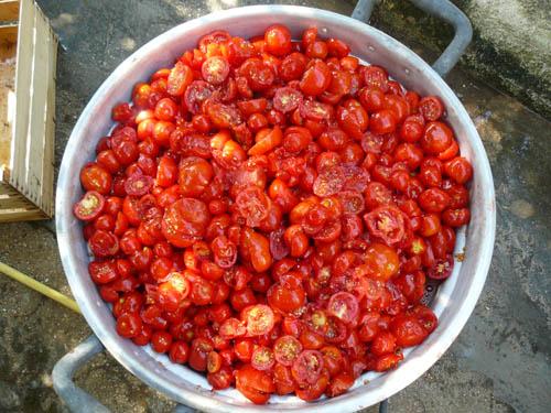 pomodori pronti da cuocere