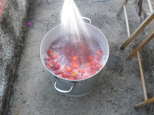 lavaggio dei pomodori