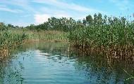 biotopi palude del fiume cavana