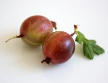 due bacche di uva spina