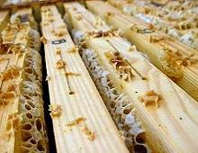 celle di api con parti di miele