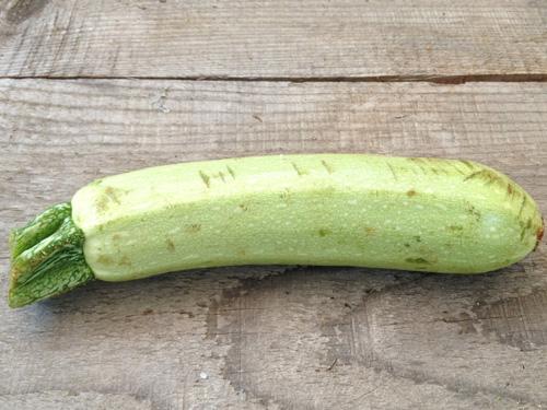 Una zucchina bianca