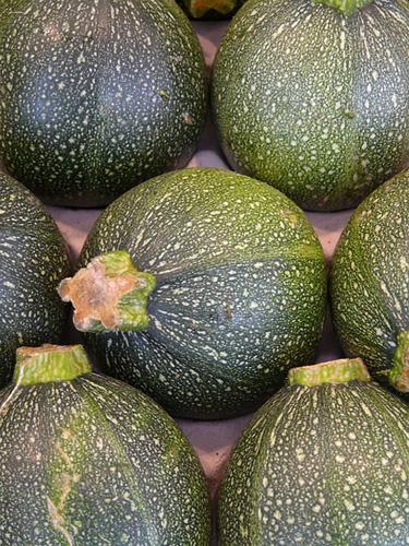 Le zucchine tonde