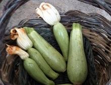 zucchine di Trieste