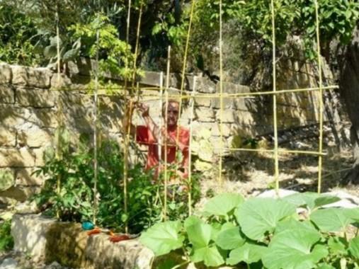 martino dietro alla gabbia dei pomodori