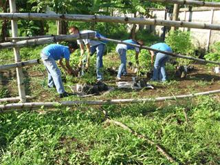 studenti trapiantano alberi