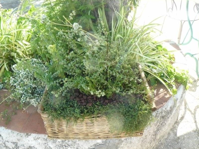 vaso con piante da orto