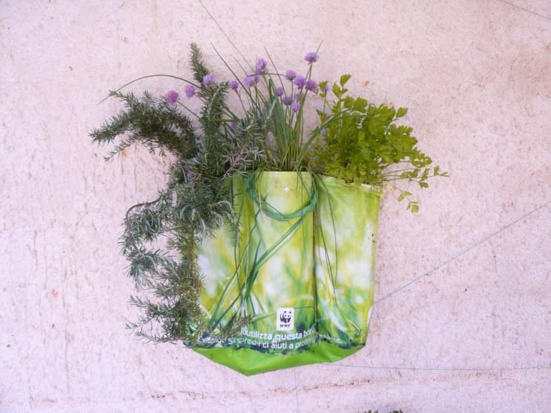 piante aromatiche nella shopper