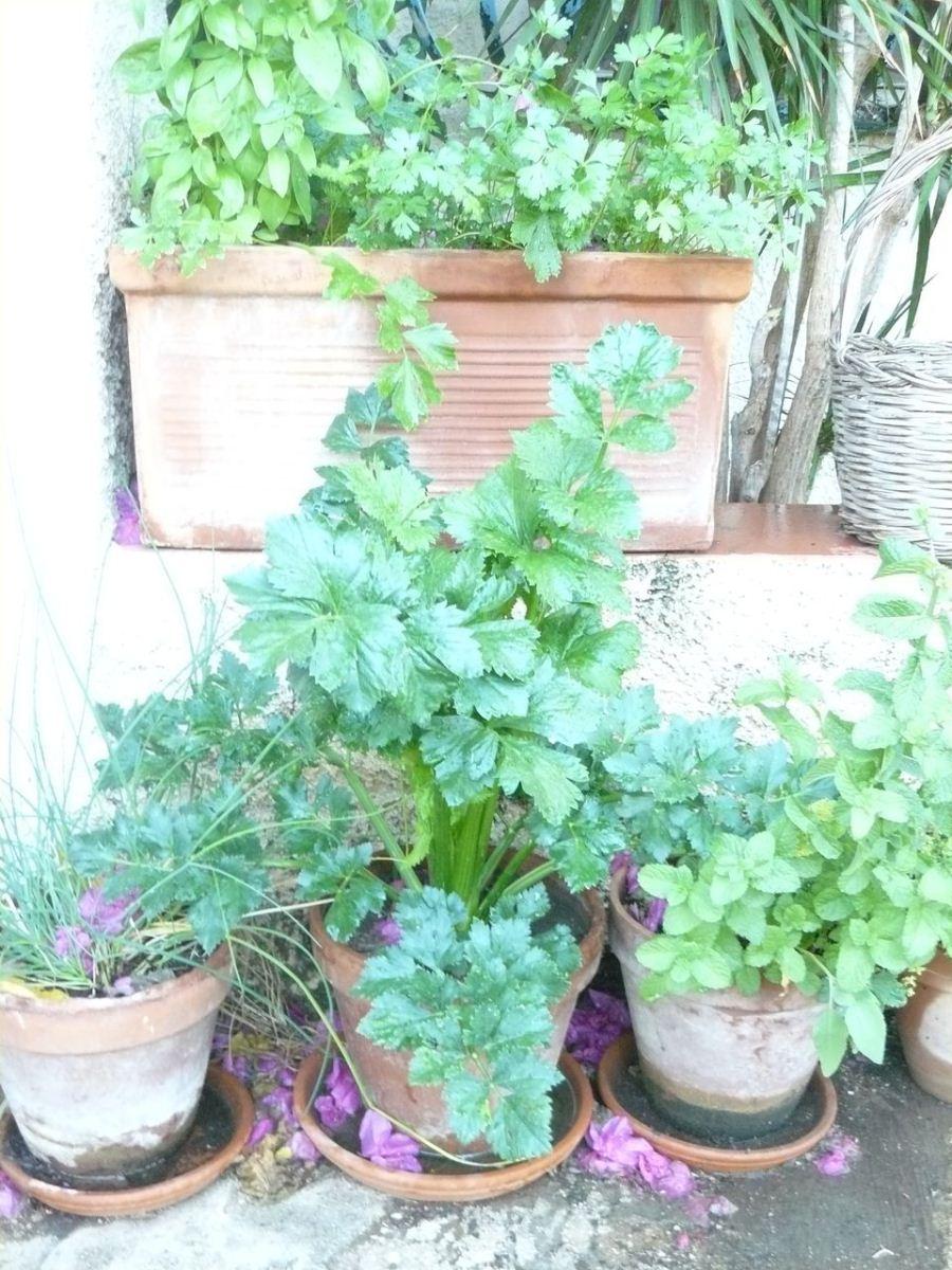 piante in vaso
