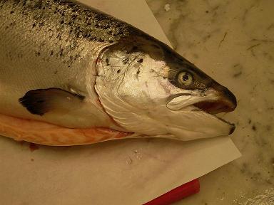 un salmone su un piano da cucina