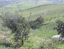 Veduta delle colline siciliane