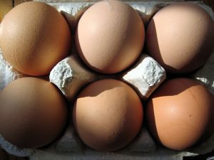 uova in cartone