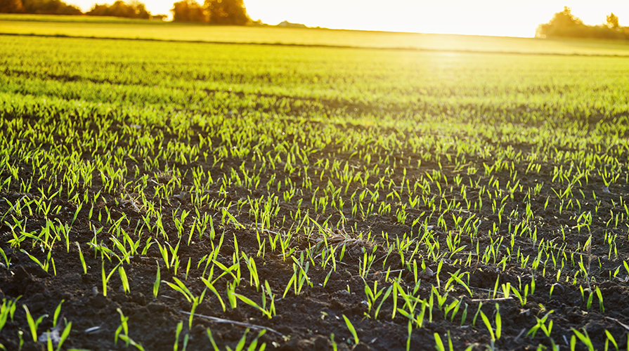 i-paesaggi-agricoli